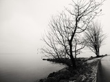 Bare Trees on a Lake Side Bank