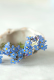 Forget Me Not Blue Flowers
