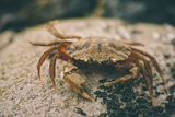 Crab at Seaside