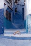 Cat in Alleyway in Morocco