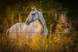 Grey Horse in Field