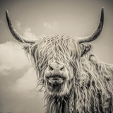 Highland Cattle Papier Photo par Mark Gemmell