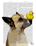 German Shepherd Dog and Duck