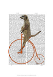 Meerkat on Orange Penny Farthing