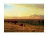 Buffalo on the Plains  C1890