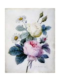 Bouquet of Roses with Daisies  Published 1834