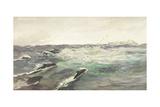 Porpoises Chasing Mackerel