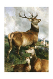 Deer of Chillingham Park  Northumberland  C1867