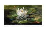 Water Lily in Sunlight  1881