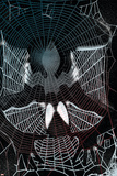 Friendly Neighborhood Spider-Man No20 Cover: Spider-Man