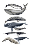 Whale Display II