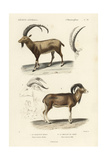 Antique Antelope and Ram Study