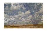 Texas Tree Collage