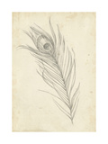 Peacock Feather Sketch I