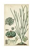 Turpin Seaweed VI