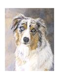 Maddie Australian Shepherd