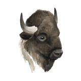 Western Animal Study IV