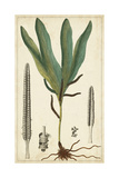 Foliage Botanique II