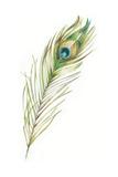 Watercolor Peacock Feather II