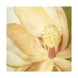 Vintage Magnolia II