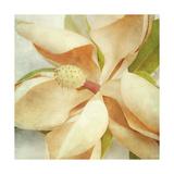 Vintage Magnolia I