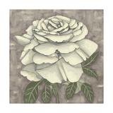 Silver Rose II
