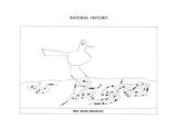 """Bird Hears BreakfastDog Remembers HomeCat Pounces on SoundRabbit Mea…"""" - New Yorker Cartoon"""
