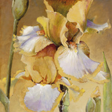 Golden Iris II