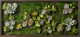 *Exclusive* Primavera Faux Succulents Wall Garden