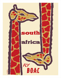 South Africa- Giraffes - Fly BOAC (British Overseas Airways Corporation)