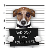 Bad Dog Temperd Glass Wall Art