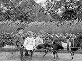 A Goat Team  Highland Park  Rochester  NY