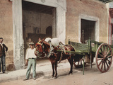 A Mule Cart in Havana Led by a Vendor