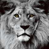 Lion Tempered Glass Wall Art