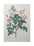 Tassled Rose
