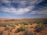 Wildflowers in the Harsh Arizona Desert