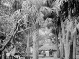 Alligator Joes Bungalow  Palm Beach  Fla