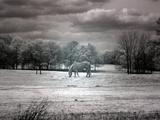 Horses in Rural Alabama