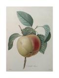 White Apple