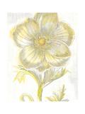 Belle Fleur Yellow II Crop