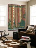 Pfeiffer Big Sur State Park  California - Giant Redwoods