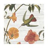 Vintage Hummingbird I