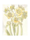 Belle Fleur Yellow IV Crop