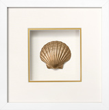 *Exclusive* Irish Deep Shell Shadowbox - Gold