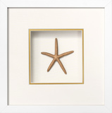 *Exclusive* Starfish Shadowbox - Gold *