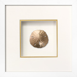 *Exclusive* Sanddollar Shadowbox - Gold