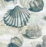 Shell Engraving 1