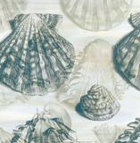 Shell Engraving 2
