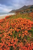 Summer Coastal Wildflowers Landscape  Carmel California