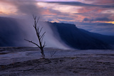Moody Hot Springs Sunset Tree  Mammoth Hot Springs  Yellowstone